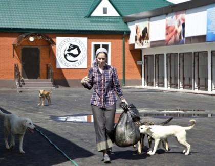 Приют для бездомных животных в Грозном